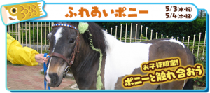 img-yasuragi_pony