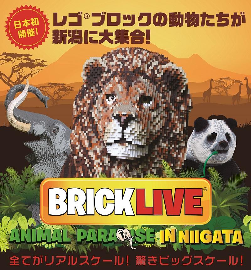 bricklive_a4chirashi_o06