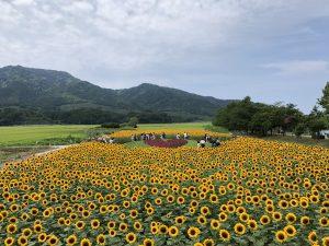 トキっ子夏のおすすめスポット上堰潟公園