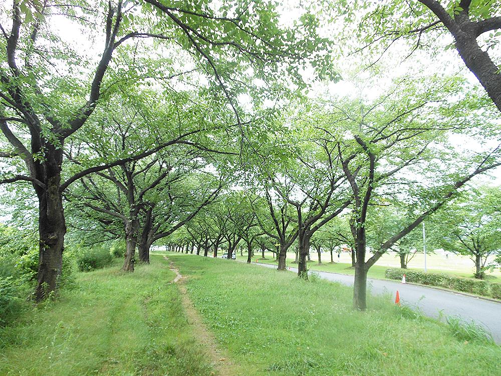 新発田中央公園_遊歩道