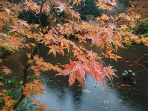 トキっ子秋のおすすめスポット赤坂山公園