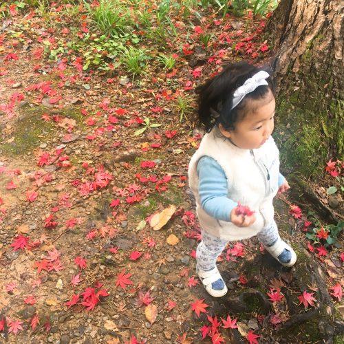 トキっ子秋のおすすめスポット加茂山公園