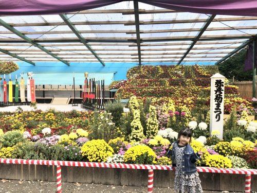 トキっ子秋のおすすめスポット弥彦神社