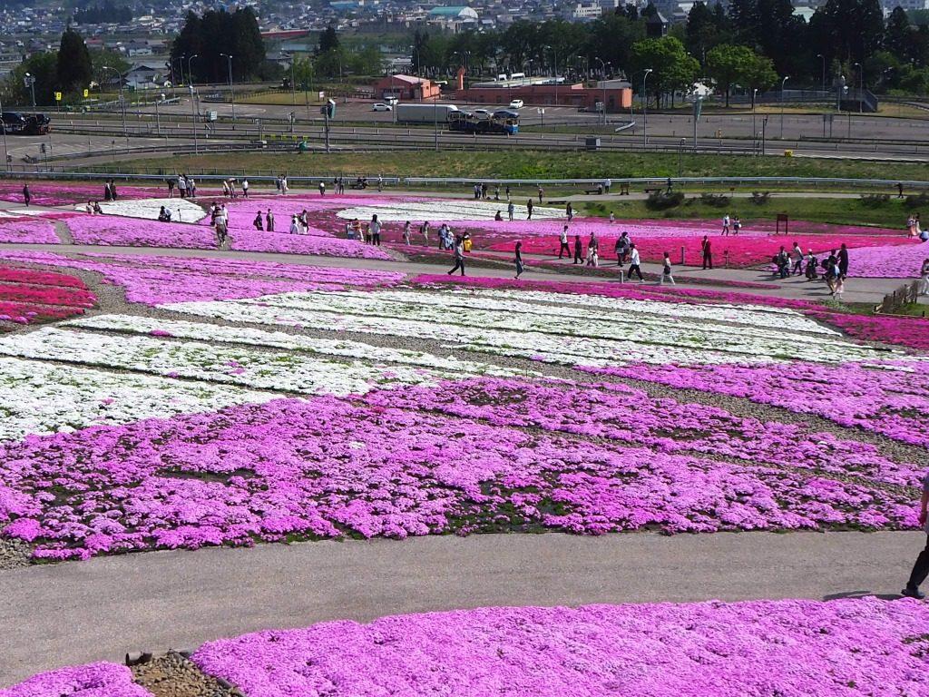 奥只見レクリェーション都市公園花と緑と雪の里芝桜