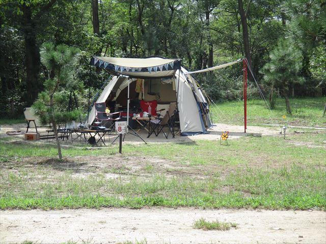 キャンプ場特集海辺の森