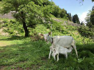 絵本と木の実の美術館ヤギ