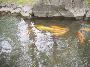 銭淵公園5
