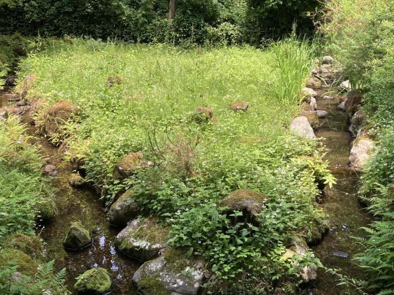 じゅんさい池6