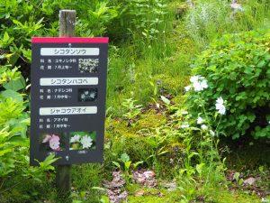 アルプの里植物