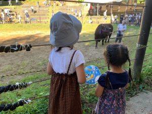 トキっ子サポート店闘牛と錦鯉の伝統文化会館:闘牛