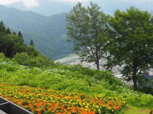 湯沢高原花