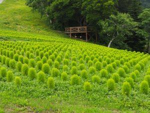 湯沢高原10