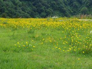 湯沢高原11